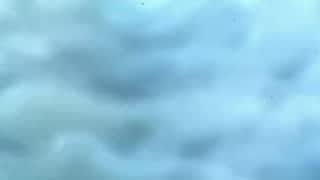 Les Aventures De Tintin - Vol 714 pour Sydney (1/2)